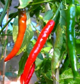 Chili Lajikkeet